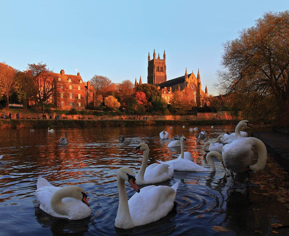 Worcester Cathedral and swans